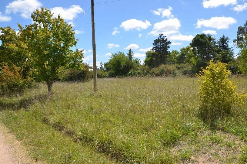 Mantenimiento de terrenos baldíos en Villa Elisa
